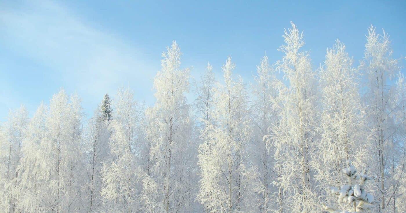 20 Mesmerizing Winter Wonderland Photos of Finland FEATURED