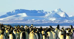 5 Facts About Antarctica featured