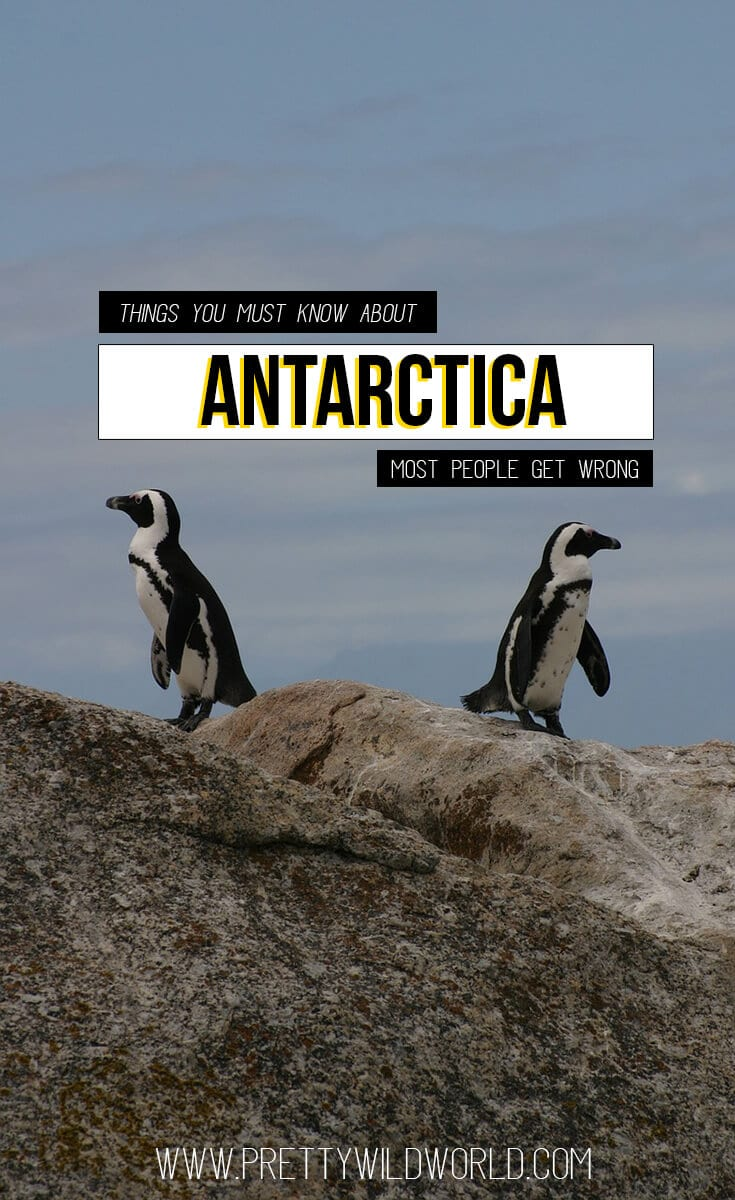 Facts about Antarctica you should know about | Trip to Antartica, Antartica cruise, Antartica should be in your bucket list, penguins, polar bear, winter all year round