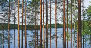 Birch tree by the lake side in Finland