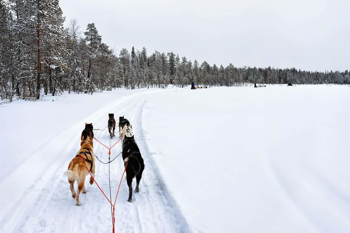 HUSKY SNOW SLEDDING IN ROVANIEMI, FINLAND