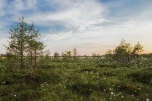 TOP PLACES TO VISIT IN ESTONIA SOOMA NATIONAL PARK