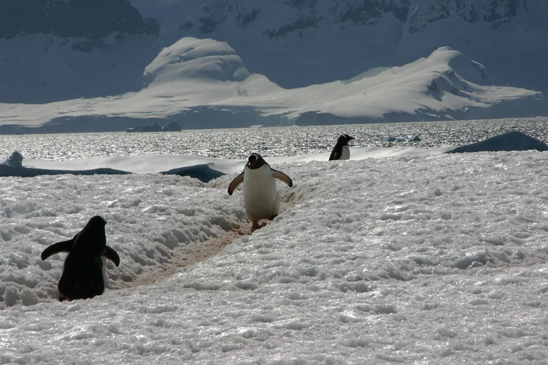 Watch Out Antarctic Cruises Will Make You Sick