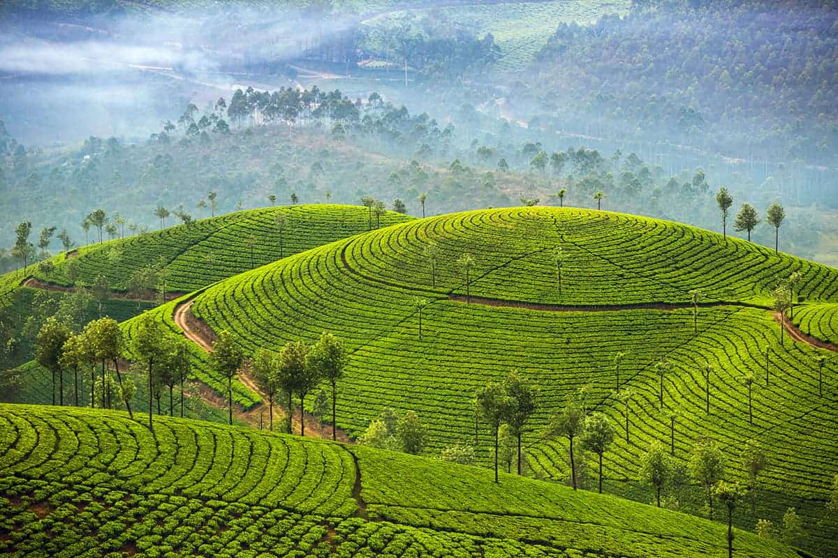 Vagamon hill stations in Kerala