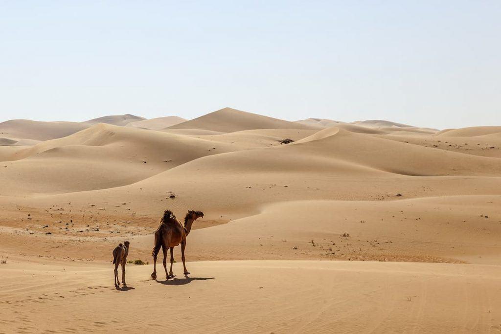 things to do in abu dhabi desert safari