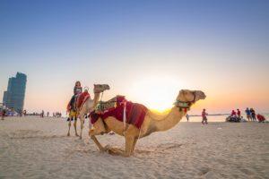 united arab emirates travel guide middle east desert safari camel ride in dubai or abu dhabi