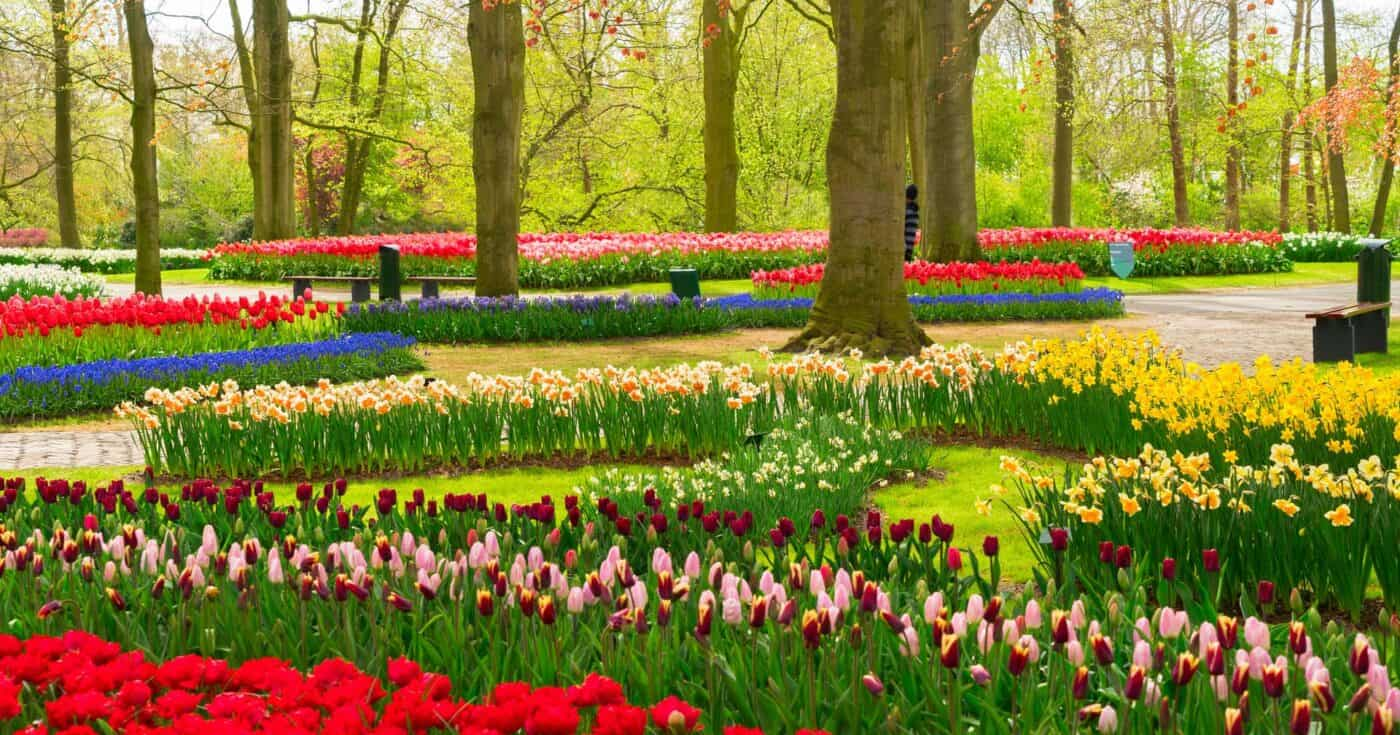top day trips from amsterdam the netherlands featured