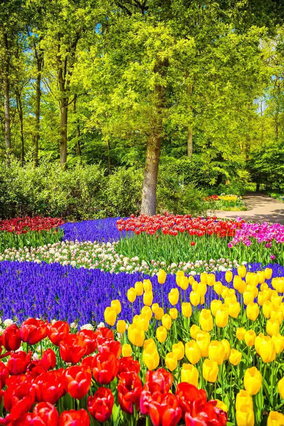 top day trips from amsterdam the netherlands keukenhof gardens