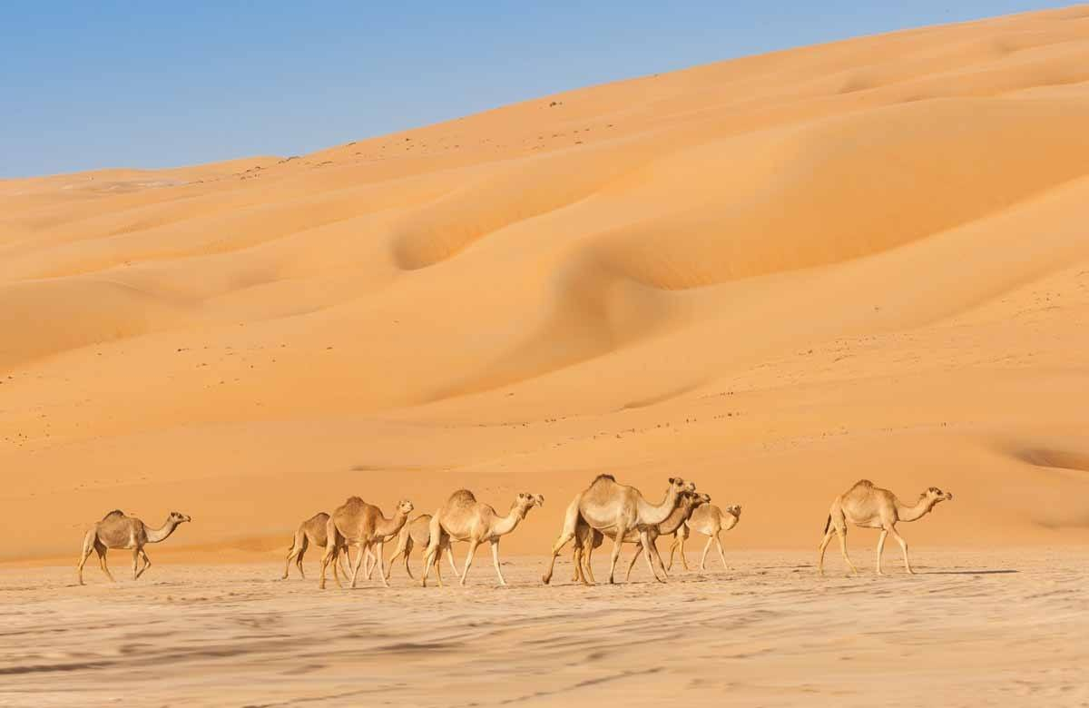 top day trips from dubai uae empty quarter