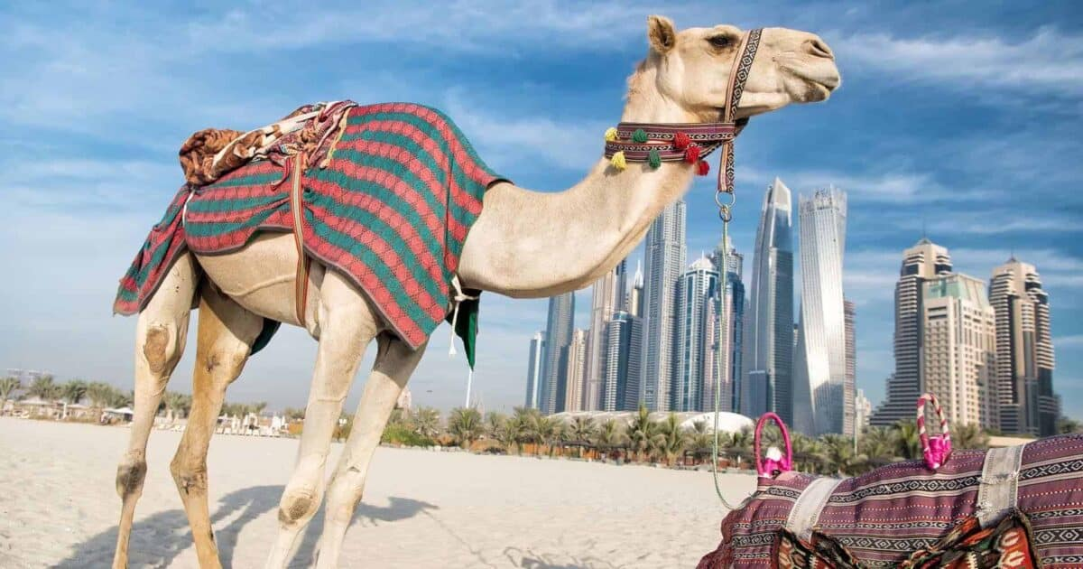top day trips from dubai uae featured