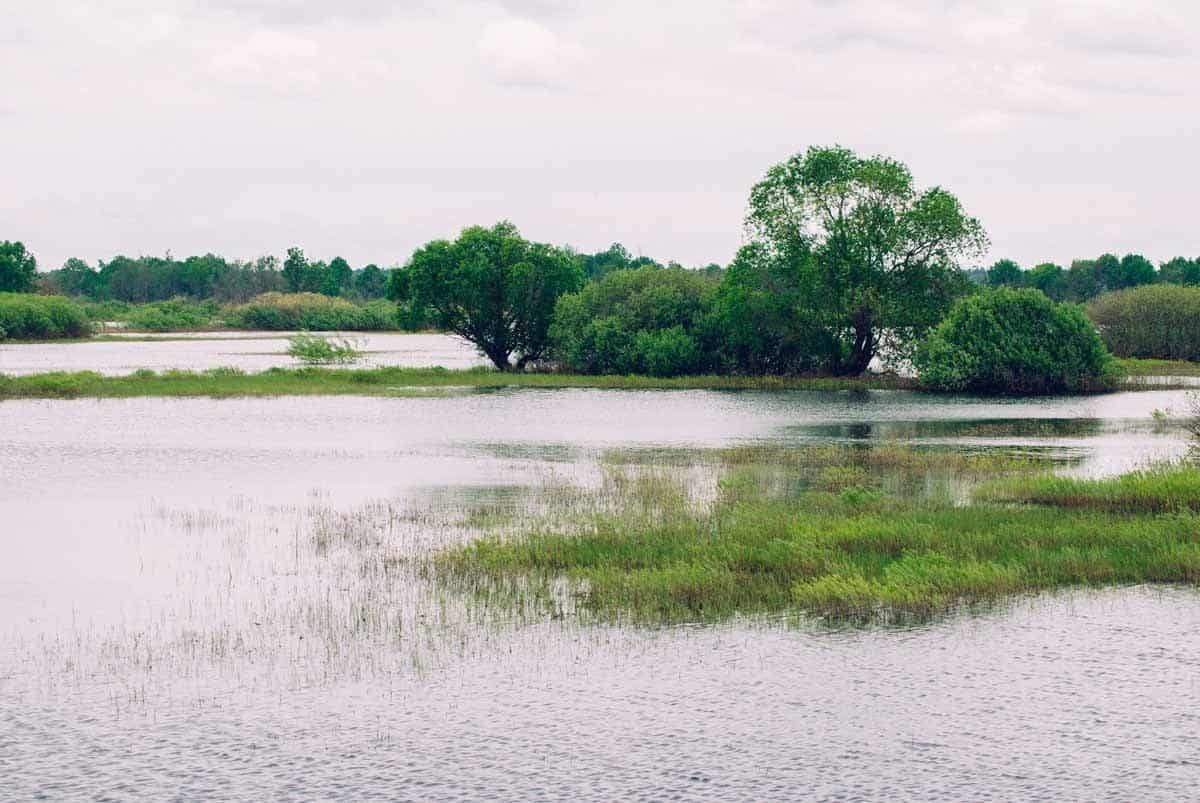 points of interest where to go and places to visit in belarus national park pripyatsky