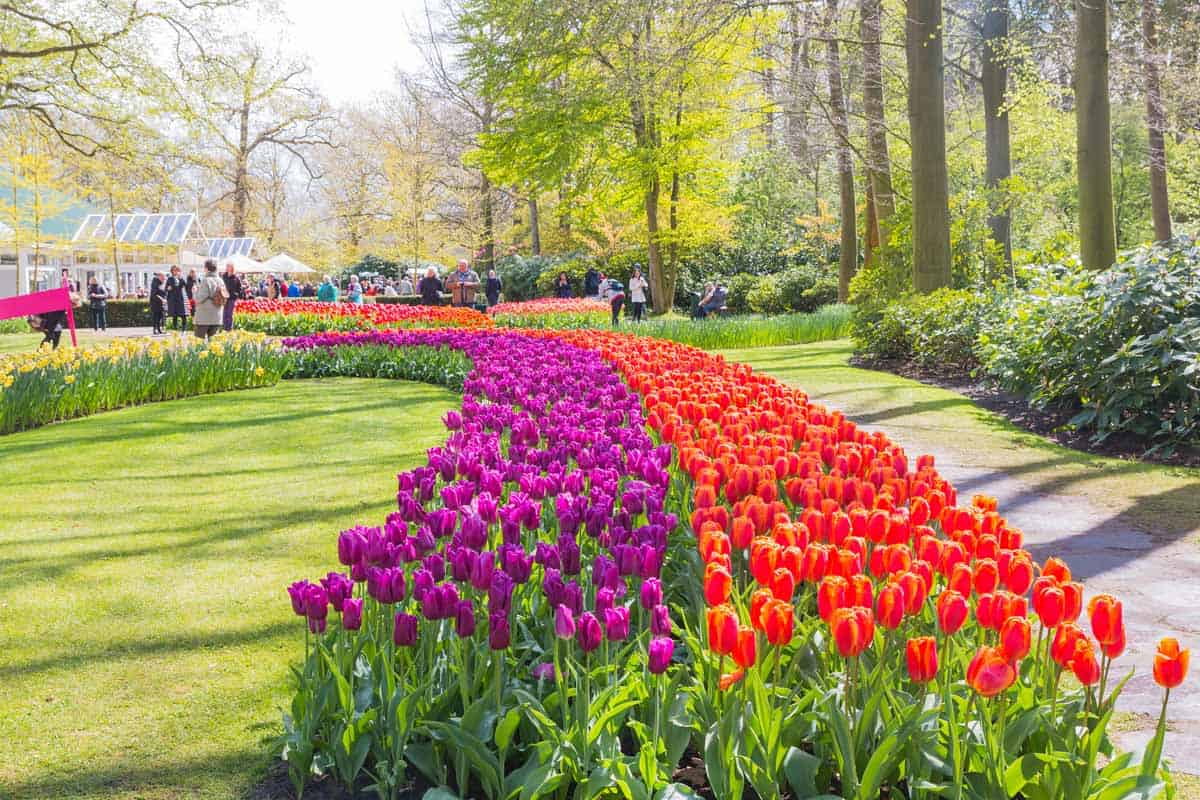 Netherlands: Blooming flowers at Keukenhof