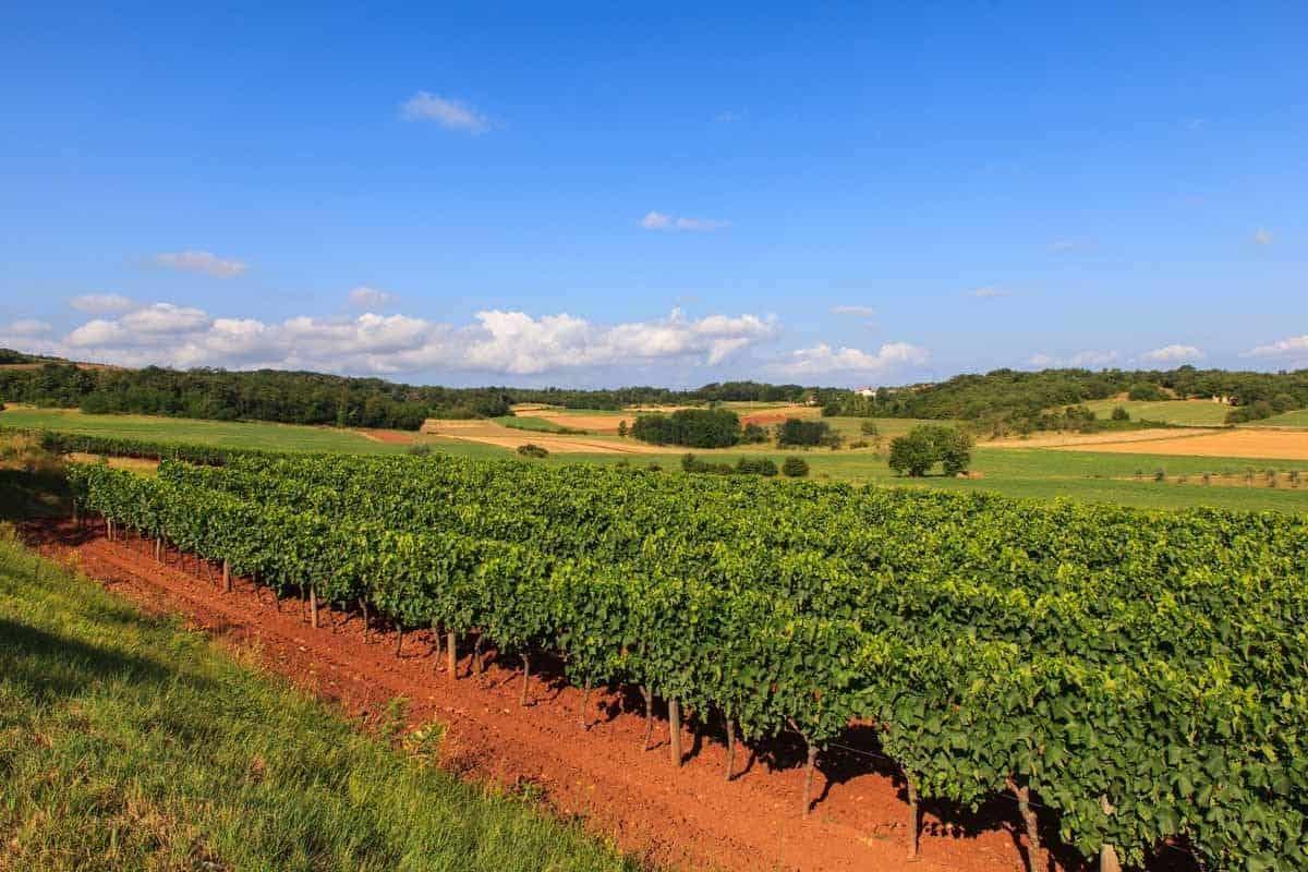 top tourist attractions in istria croatia vineyard
