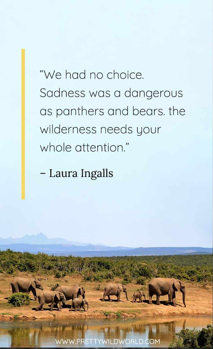 Best Forest Quotes: Top 25 Wilderness and Jungle Quotes for ...