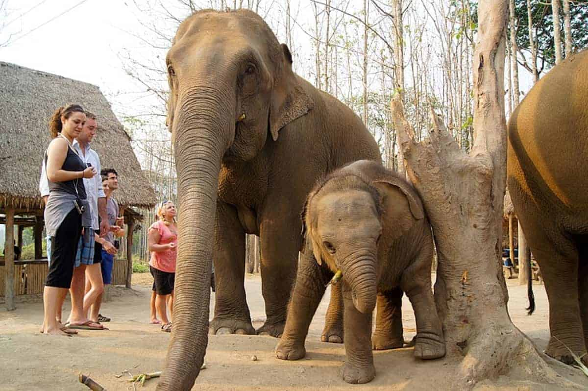 Elephant Sanctuary In Chiang Ma