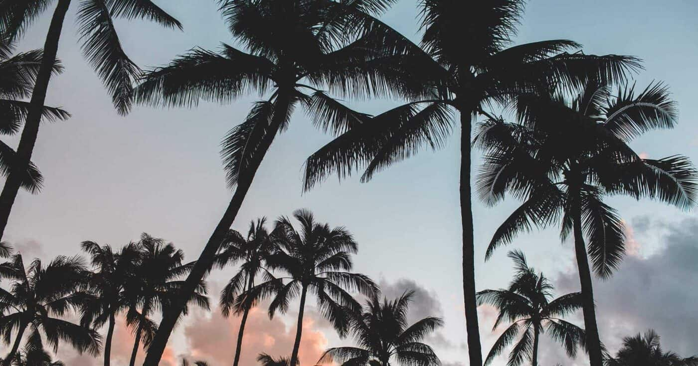 A photo of coconut trees