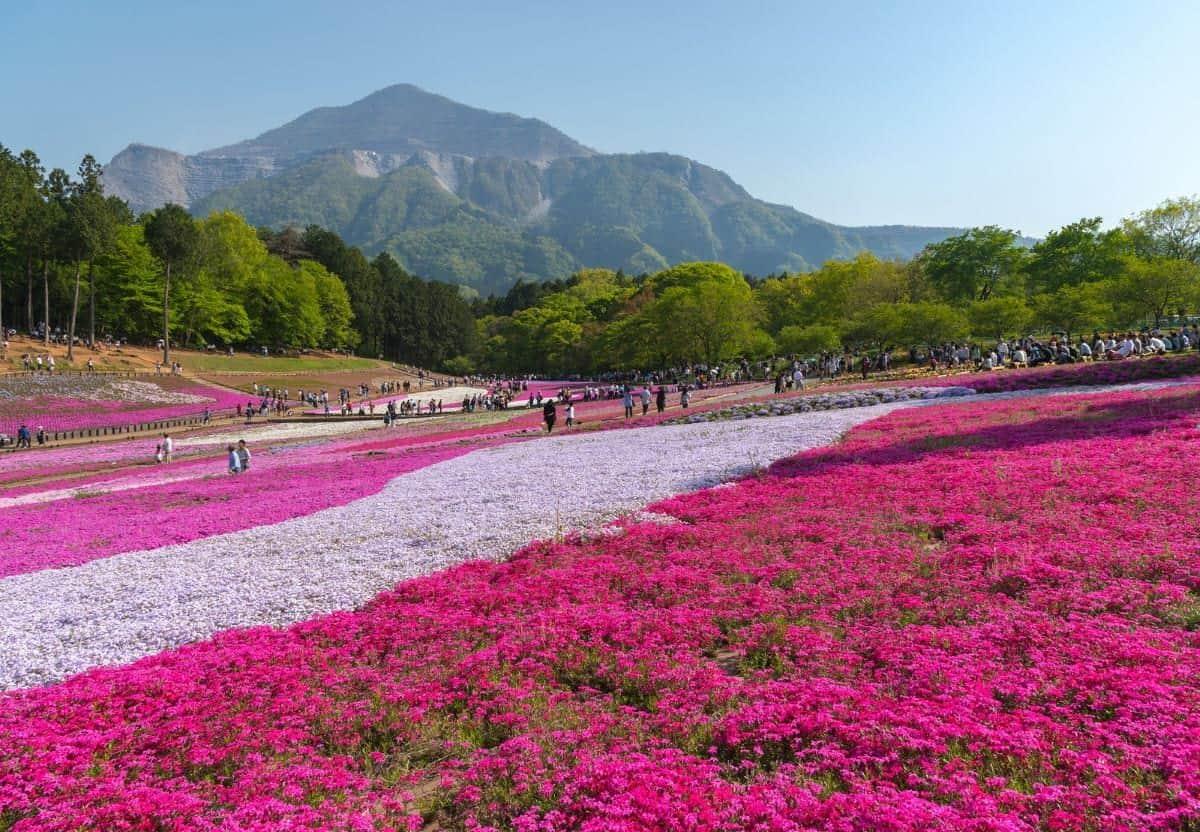 Hitsujiyama Park in Chichibu Saitama Japan