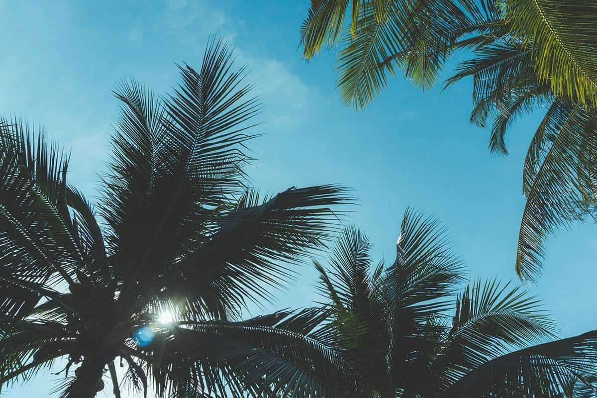 Explore Jungle Island