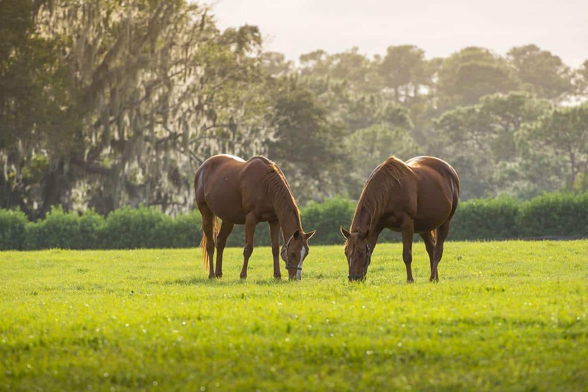 Forever Florida Wildlife Conservation Area