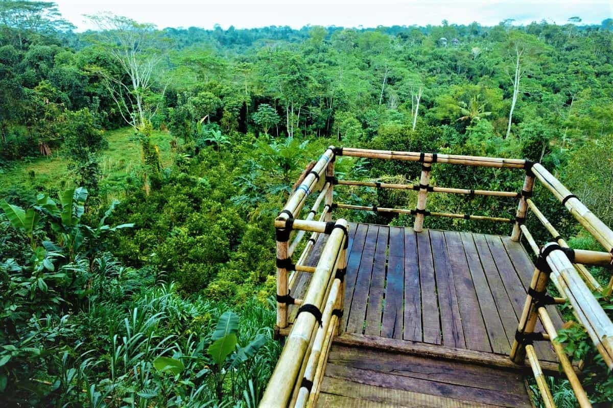 Coffee Plantation Bali Pulina