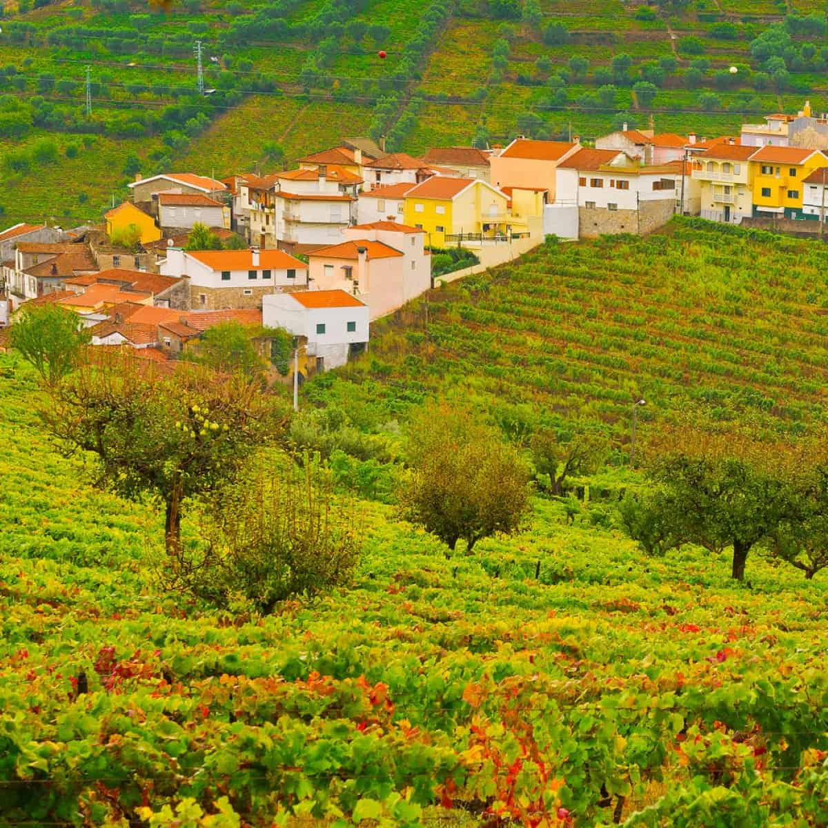 Autumn view in the Vineyards on the Hills of Portugal