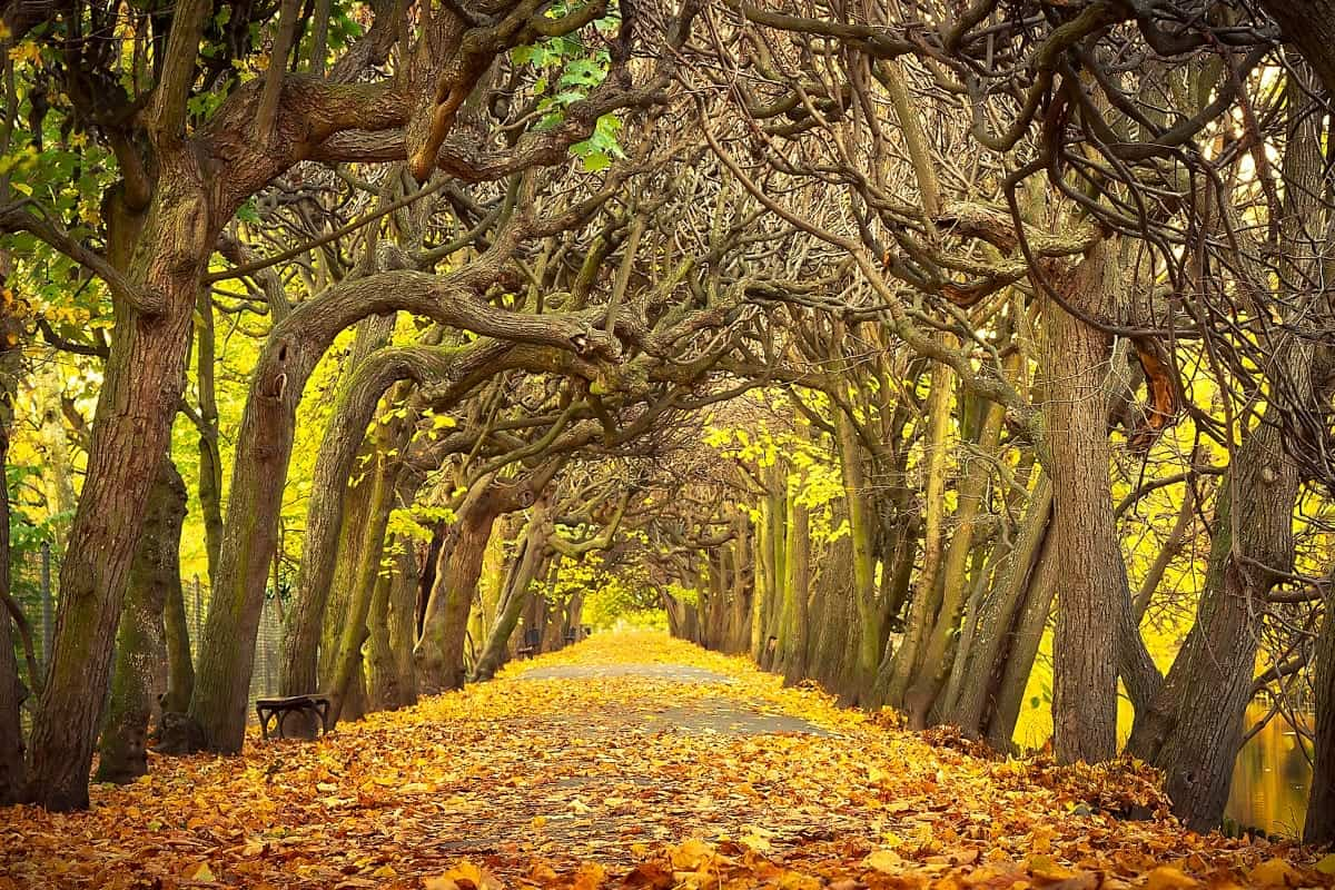 Autumnal alley in the park of Gdansk Poland