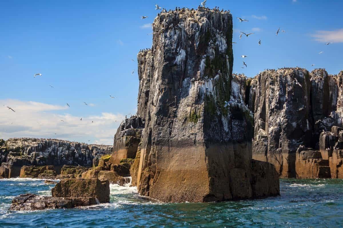 The pinnacles staple island farne islands
