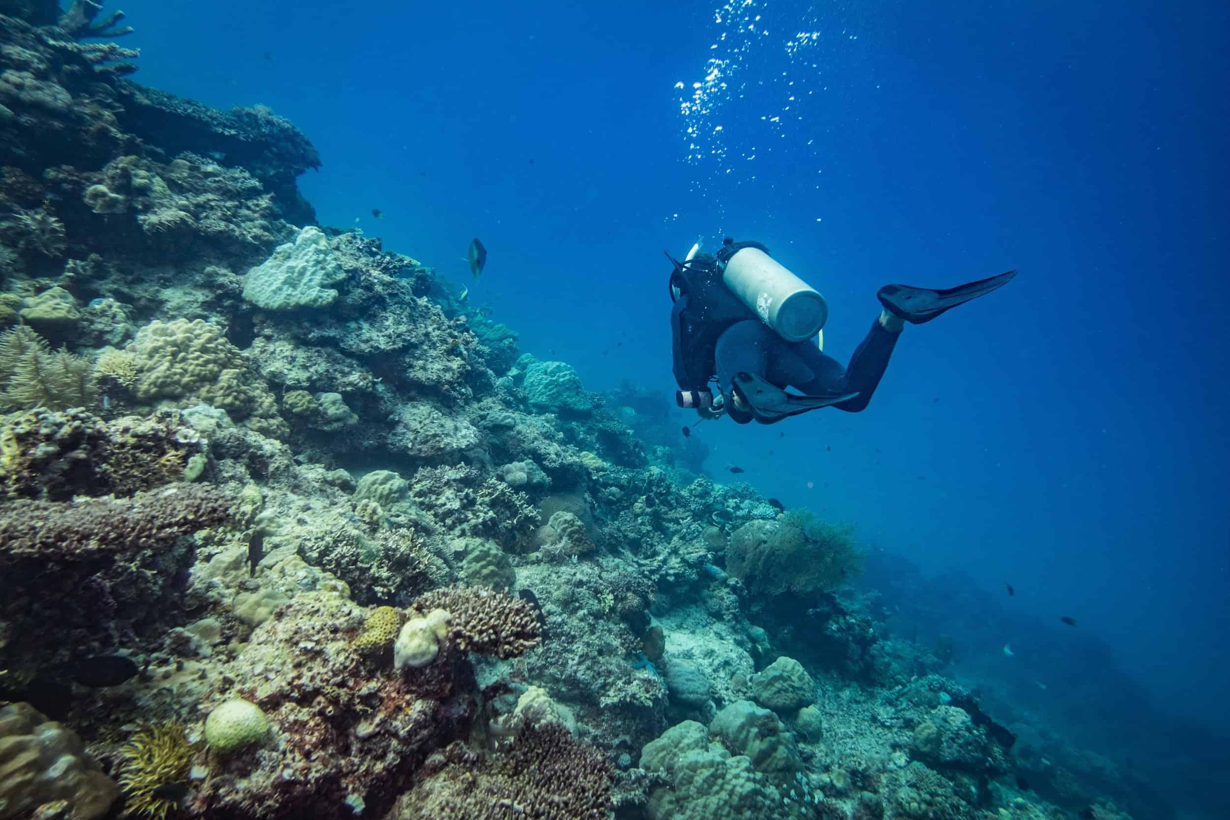 Scuba Diving Tour in Coron