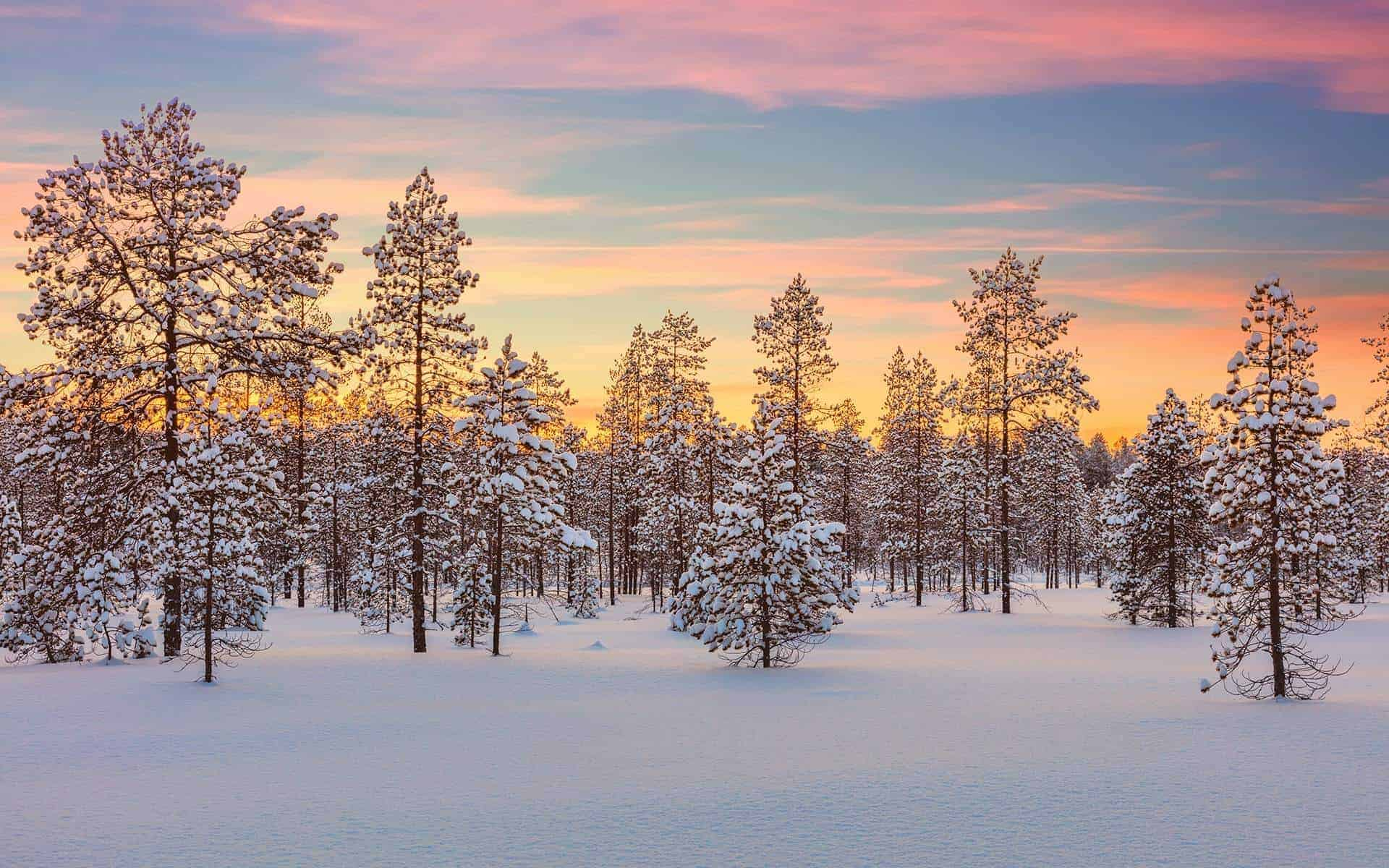 Photo of Finland during winter used as a banner background for Pretty Wild World. Photo was bought from Shutterstock.