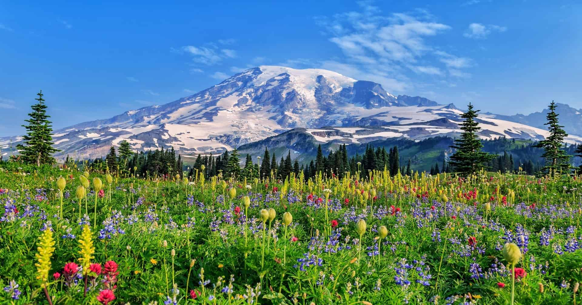 Wildflowers at Mount Rainier Washington State USA