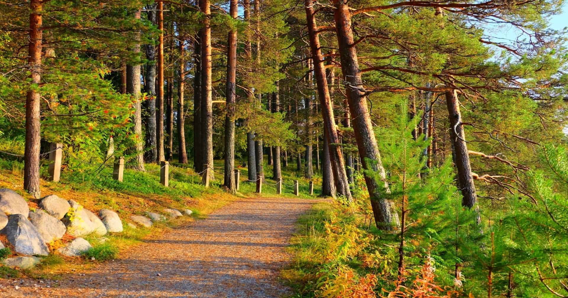 Forest in Kuhmo Finland