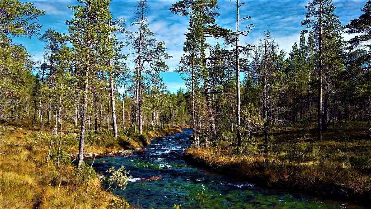 Hiking Landscape in Lapland