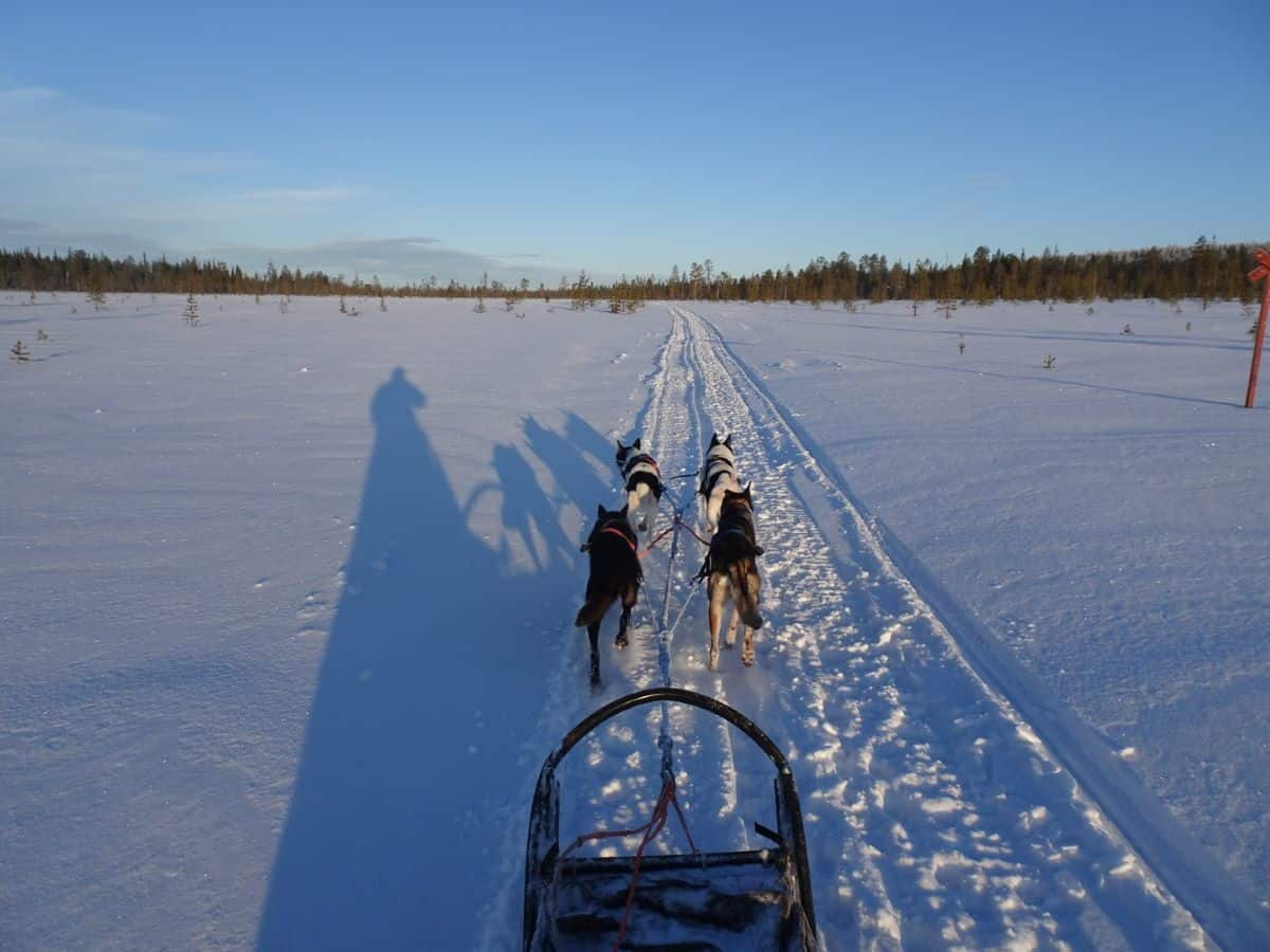 dog sledding in Lapland Finland