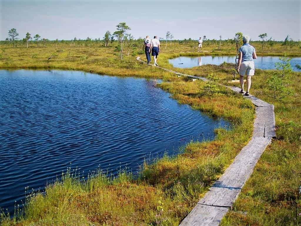 Things to do in Pärnu: Walking on Kuresoo Bog Soomaa national park Estonia