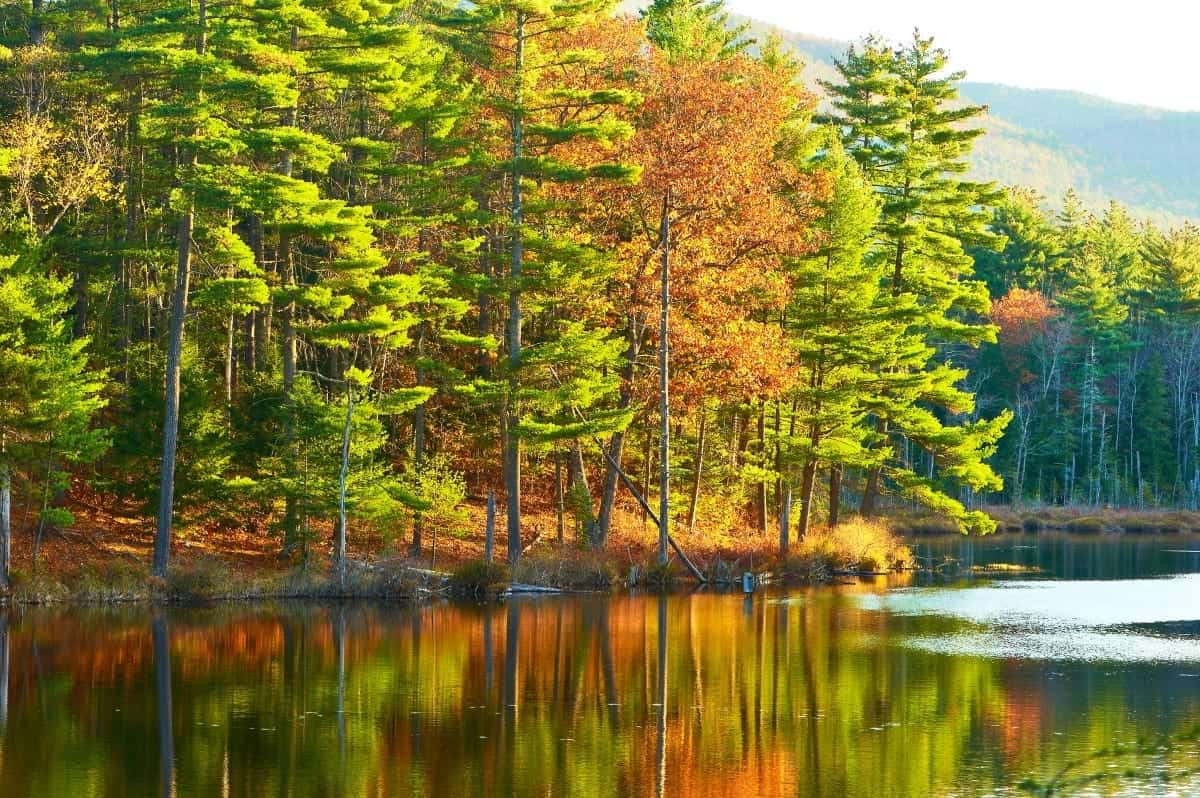 Pond in White Mountain National Forest New Hampshire USA