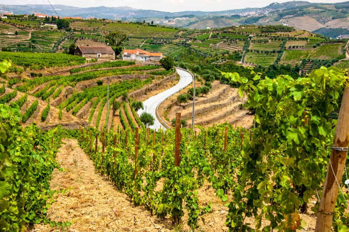 Douro Valley Home of the port wine