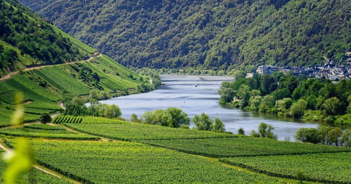 Mosel river vineyard Germany