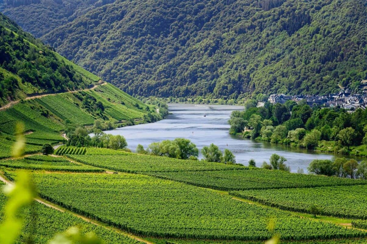 Mosel river vineyard Germany