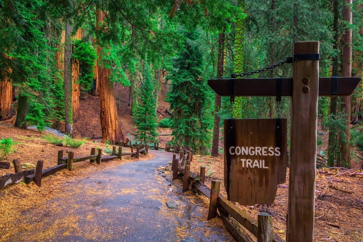 Congress Trail Giant Forest of Sequoia National Park California