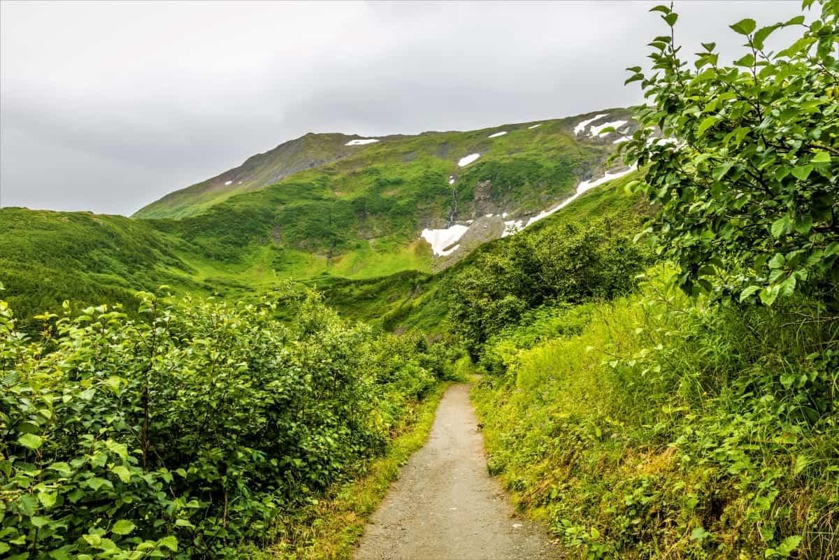 Mount Roberts Trail Juneau Alaska