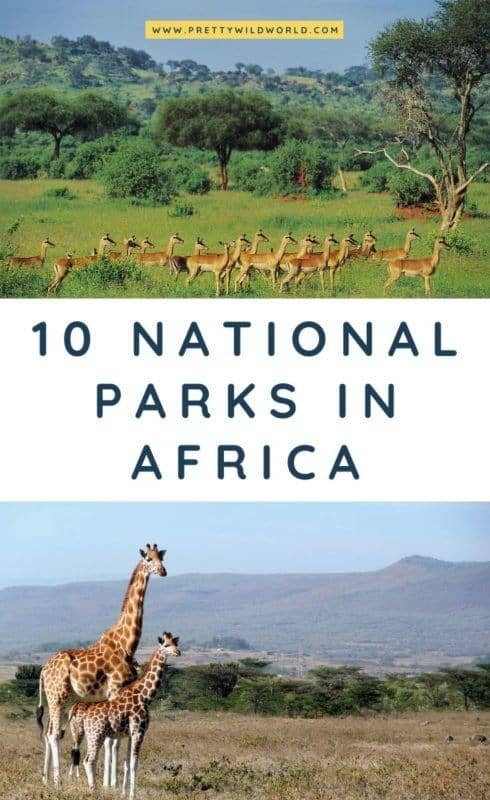 National Parks in Africa | Are you interested in unique travel adventures? Mix culture, tradition, food, and epic safari excursions on your next trip and check out this post about the top national parks in Africa! #africa #travel #traveldestinations #traveltips #bucketlisttravel #travelideas #travelguide #amazingdestinations #traveltheworld