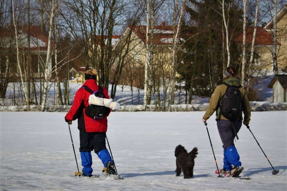 Things to do in Salla: Snowshoeing in finland