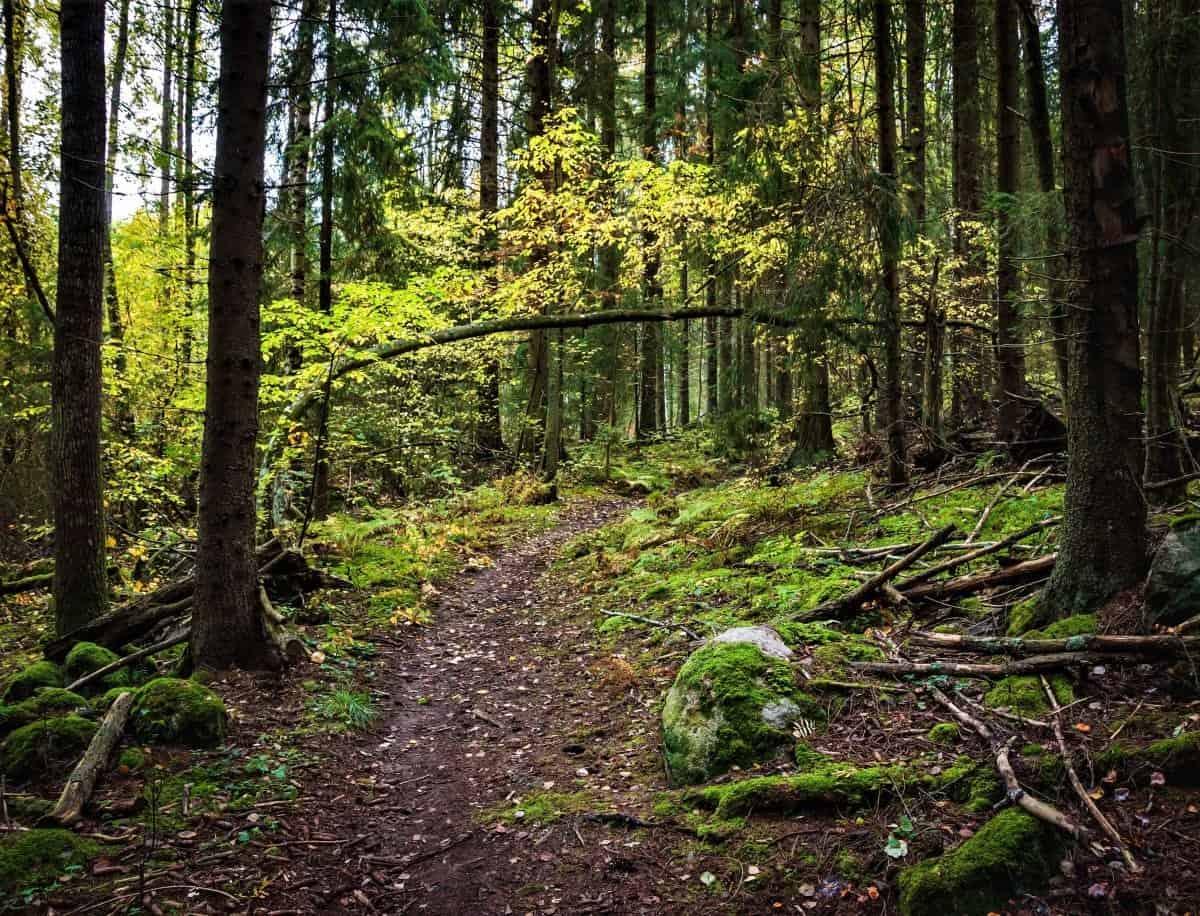Nature trails at Aulanko Hämeenlinna Finland