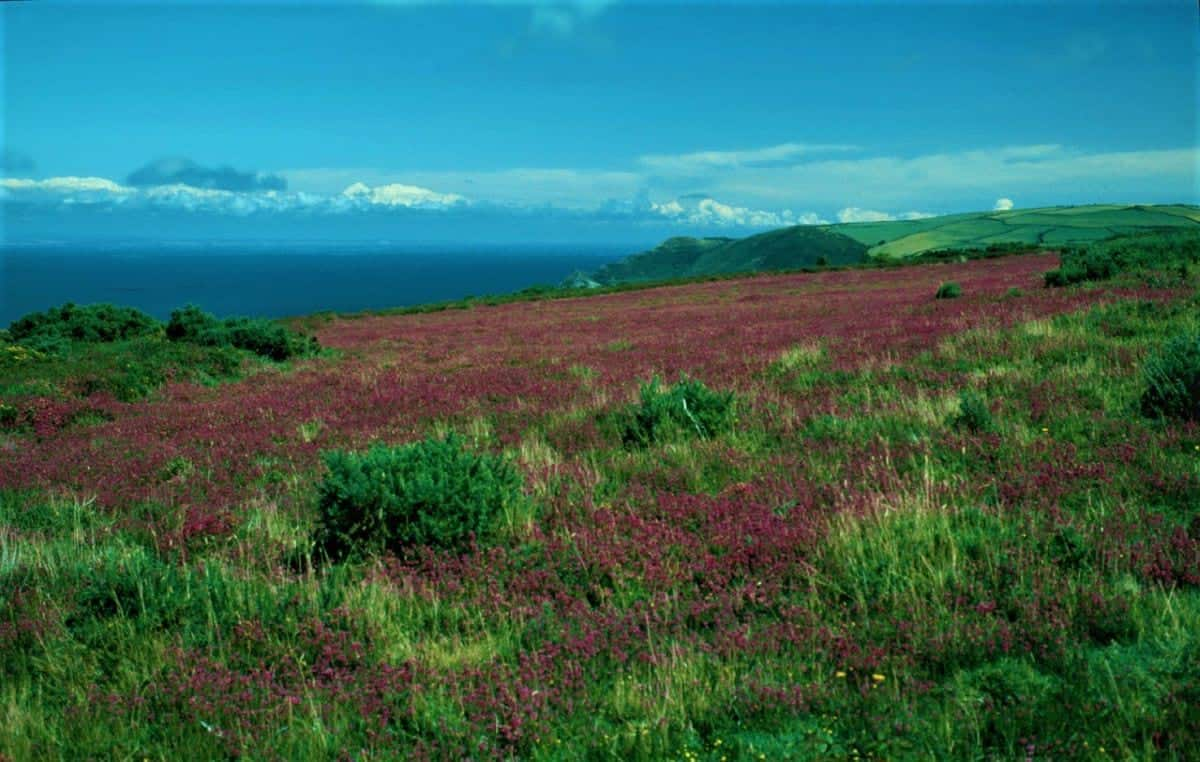 Coastal Area of the Exmoor National Park