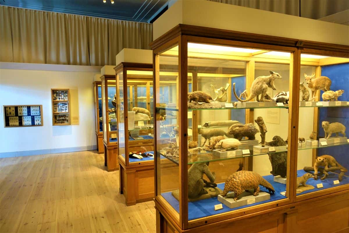 Museum of Natural History stockholm