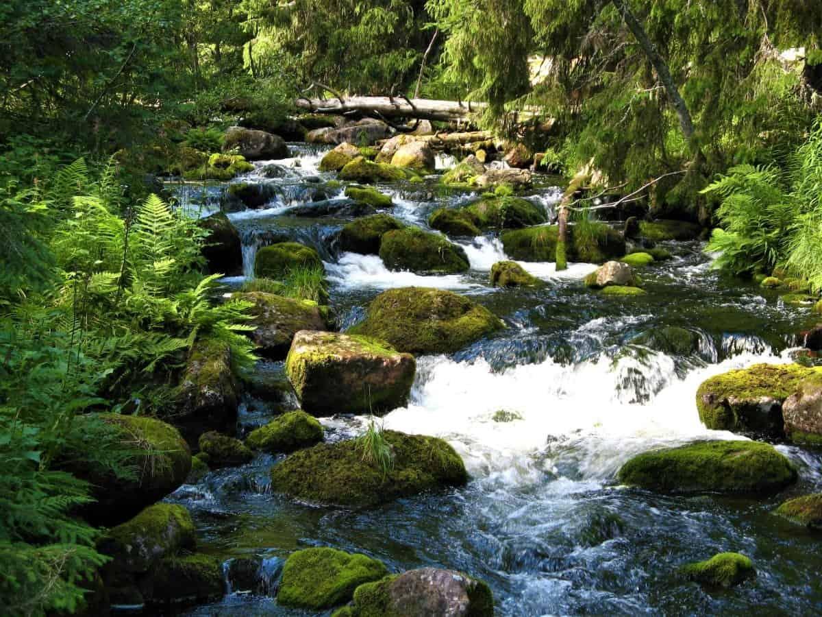 Fulufjället national park brook
