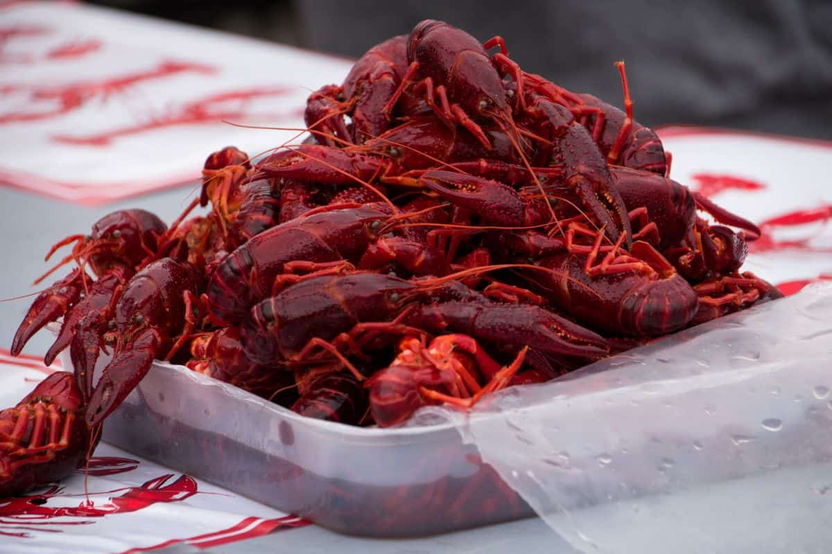 Crayfish party, malmo sweden