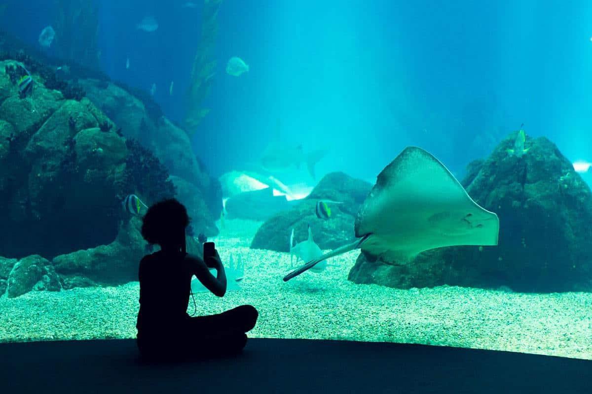 top tourist attractions in lisbon portugal oceanarium