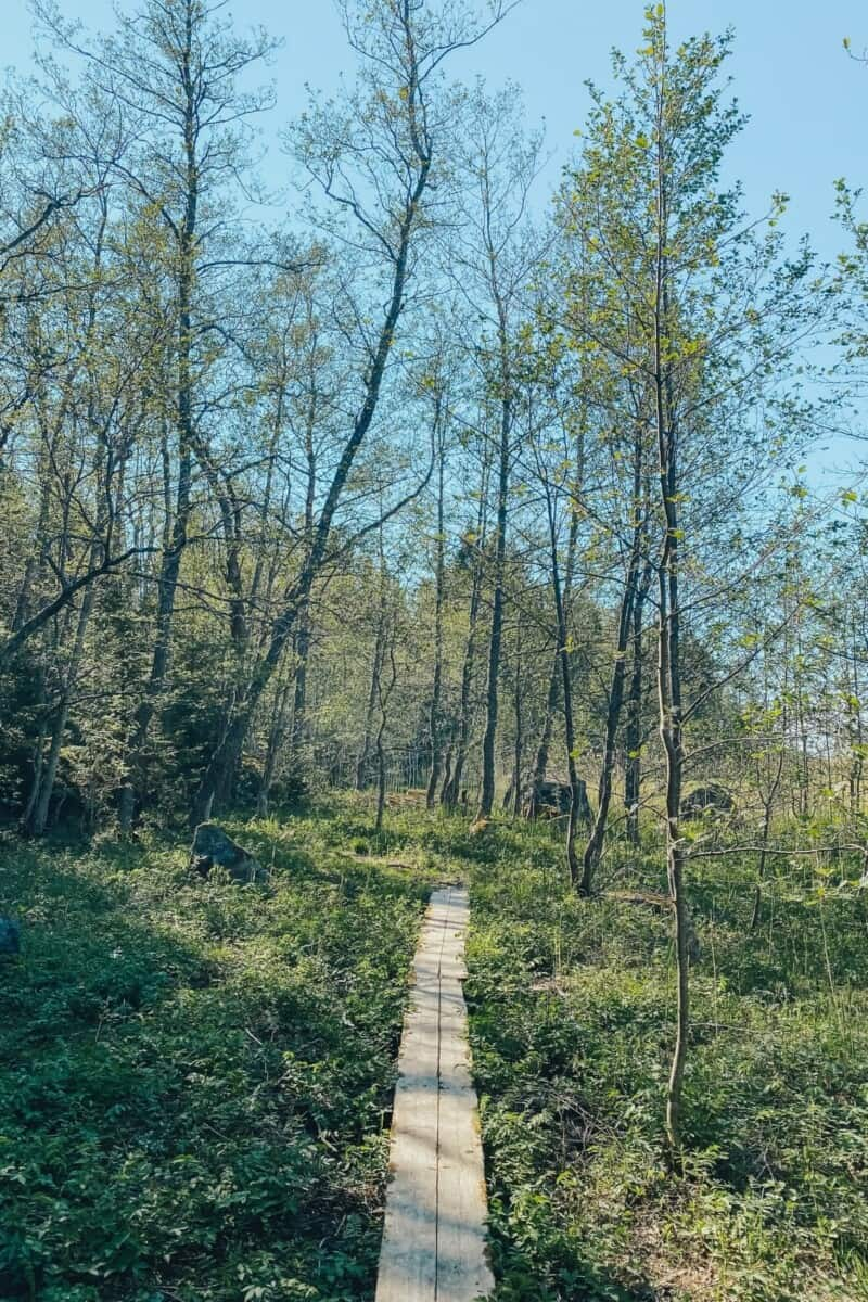 Hiking in one of the nature trails in Vaasa.